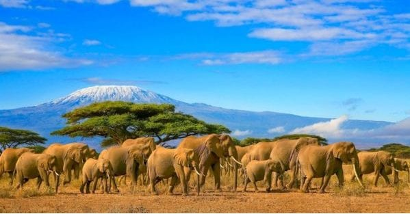 Manada de elefantes en Africa